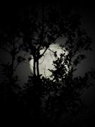 moonfromDale - 8 - P1010537