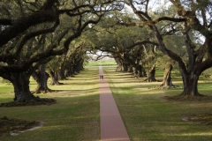 2017 03 1-5 Magestic row of live oaks at Oka Alley - 064