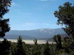 Pacific-Crest-Trail-near-Big-Bear-20