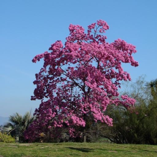 Springtime-in-Balboa-Park-05