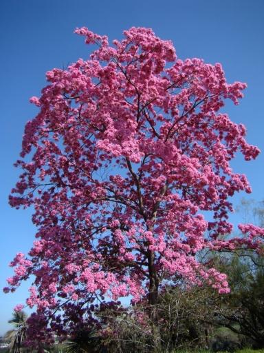 Springtime-in-Balboa-Park-09