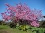 Springtime in Balboa Park
