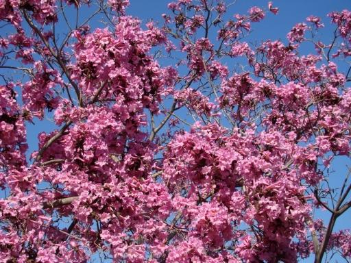 Springtime-in-Balboa-Park-12