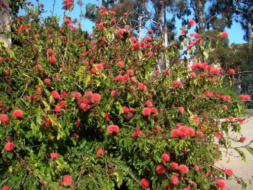 Springtime-in-Balboa-Park-14
