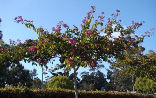 Springtime-in-Balboa-Park-18