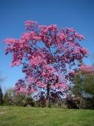 Springtime-in-Balboa-Park-06