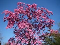 Springtime-in-Balboa-Park-07