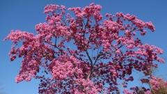 Springtime-in-Balboa-Park-08
