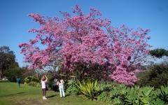 Springtime-in-Balboa-Park-10