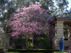 Springtime-in-Balboa-Park-16