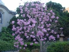 Springtime-in-Balboa-Park-17