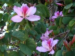 Springtime-in-Balboa-Park-19
