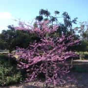 Springtime-in-Balboa-Park-20
