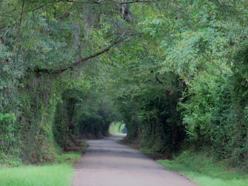 Road - 1 - IMG_1013_1