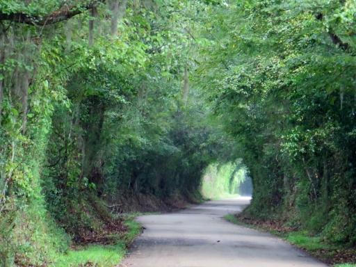 Scenic Road - IMG_1017