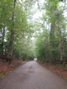 Depressed Road - IMG_1025