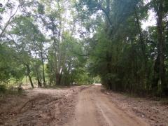 Scenic Road Along Bayou Saro to Cypress Trees - IMG_0921