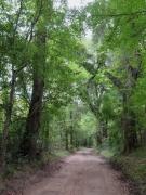 Scenic Road along Bayou Saro - IMG_0933