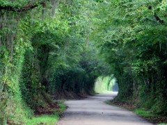 Scenic Road - color adjusted - IMG_1017