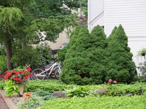 Sculptured Bushes and Bicycles - IMG_0601