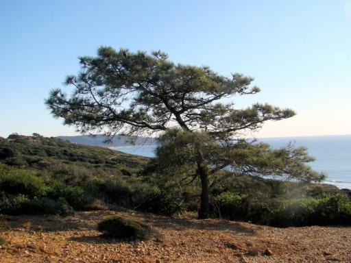 Torrey-Pines-01
