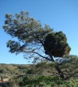Torrey-Pines-09
