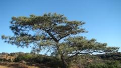 Torrey-Pines-10