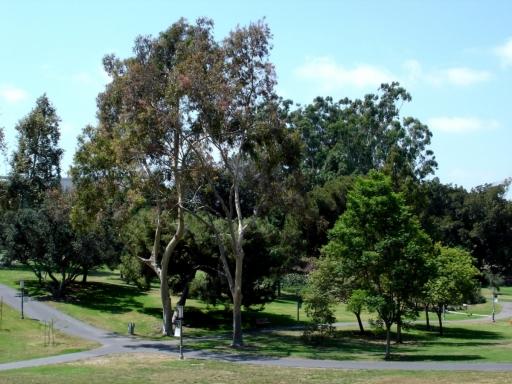 UC-Irvine-Campus-03