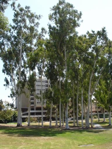 UC-Irvine-Campus-04