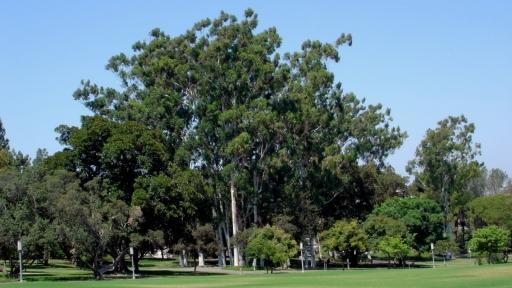UC-Irvine-Campus-07