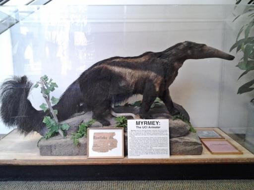 UC-Irvine-Campus-38-Peter-the-Anteater-mascot