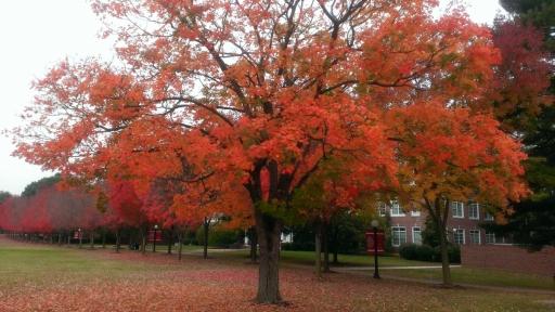Virginia-Fall-Colors-01