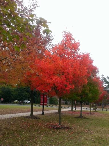 Virginia-Fall-Colors-02