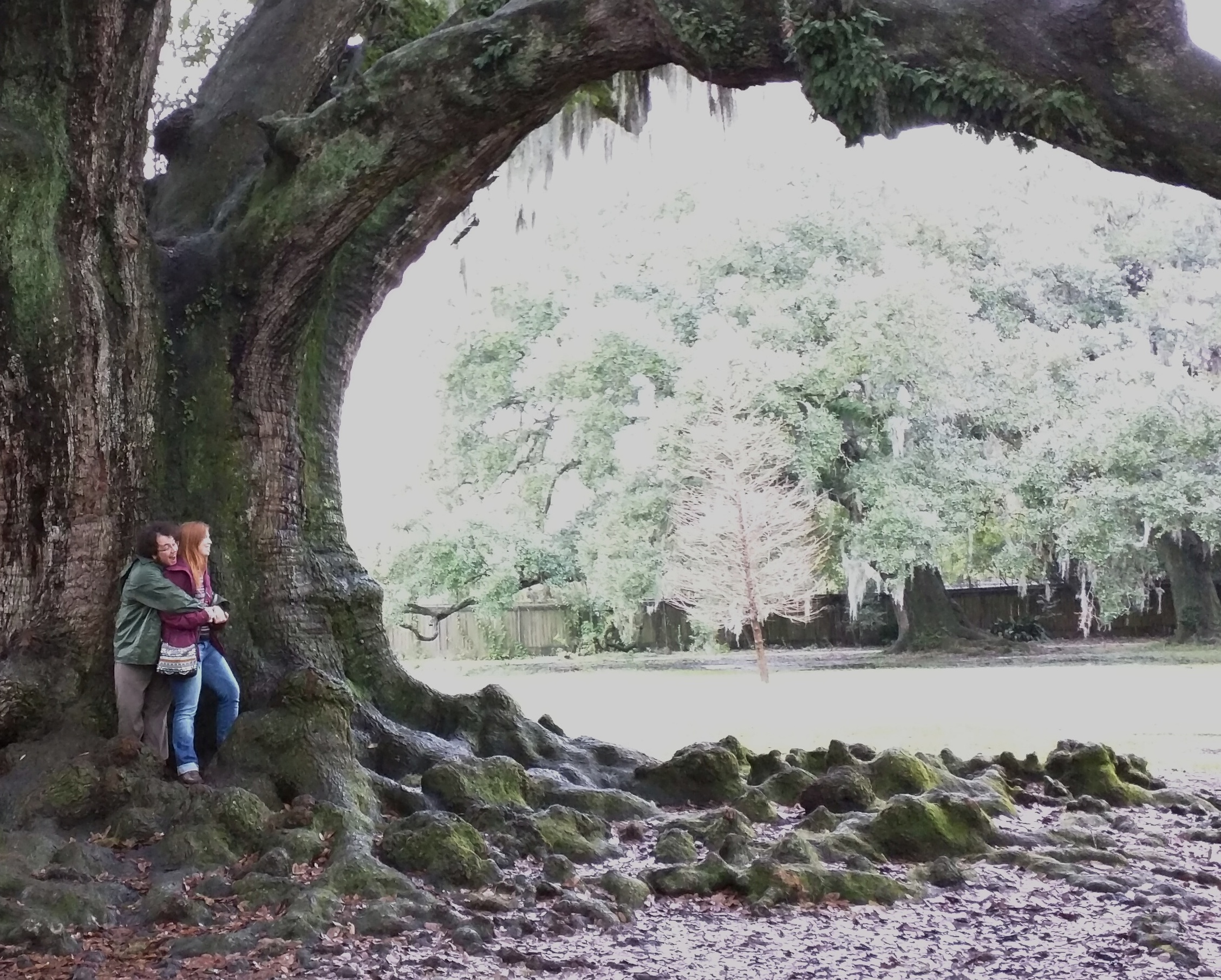 tree of life in new orleans audubon park picturesque. Black Bedroom Furniture Sets. Home Design Ideas